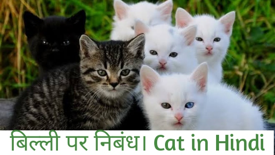 Essay About Cat in Hindi, Essay on Cat in Hindi, About Cat in Hindi, Information About Cat in Hindi
