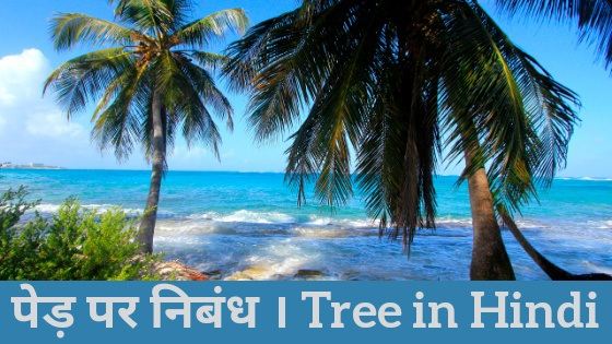 Essay on Tree in Hindi, About Tree in Hindi, 10 lines About in Hindi, Tree in Hindi Essay, Essay on Importance of Tree in Hindi