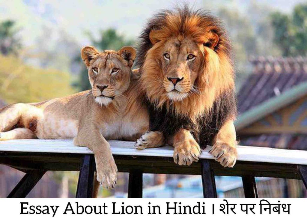 About Lion in Hindi, Essay on Lion in Hindi, Information About Lion in Hindi, Lion in Hindi