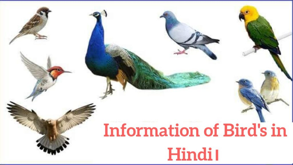 Information of Birds in Hindi, Importance of Birds in Hindi, About Birds in Hindi, Importance of Birds in Nature in Hindi, Uses of Birds in Hindi, Colours Birds Images, Colorful Birds